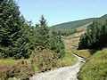 Byway descending to the Afon Tywi, Powys - geograph.org.uk - 1571323.jpg