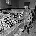 CNRZ porcheries expérimentales années 60-13-cliche Jean Joseph Weber.jpg