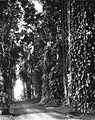 COLLECTIE TROPENMUSEUM Ingang van 's Lands Plantentuin te Buitenzorg TMnr 60025344.jpg