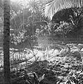 COLLECTIE TROPENMUSEUM Landschap in de omgeving van Iseh TMnr 60030639.jpg