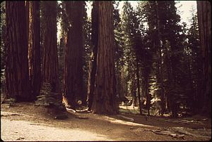 CONGRESS TRAIL SEQUOIA AND KINGS CANYON NATION...