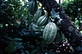 CSIRO ScienceImage 2096 Tropical Fruits.jpg