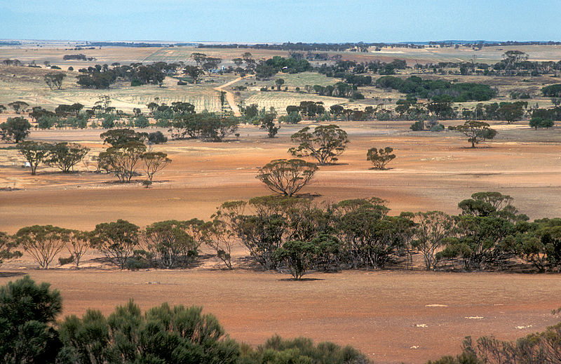 File:CSIRO ScienceImage 4462 Landscape view of farmland near Bruce Rock in the Western Australian wheat belt 1981.jpg