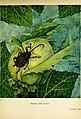 Caccia grossa fra le erbe (1942) (20323956888).jpg