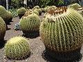 Cactus & Succulents (183444079).jpg