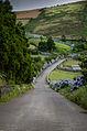 Caminho Sinuoso - Ilha Terceira.jpg