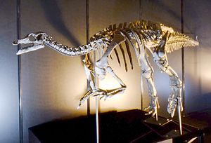 Camptosaurus - Reconstructed skeleton in Japan