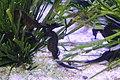 Capetown - Two Oceans Aquarium IMG 9456.JPG