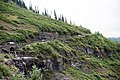 Cars driving Going to the Sun Road in Glacier National Park (29762253442).jpg