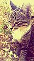 Cat pisik kedi animal pussy svln4821 cute 01.jpg