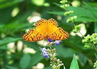 Queen Elizabeth II Botanic Park - Butterfly at QEII Botanical Park, Grand Cayman