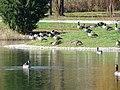 Chadwick Arboretum and Learning Gardens (38235138386).jpg