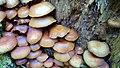 Champignons en Vanoise (1).jpg