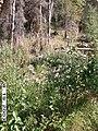 Charley River Water Quality Testing, Yukon-Charley Rivers, 2003 3 (9c4eec60-da35-4a9d-8d70-78d5940f64a3).jpg