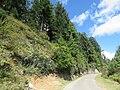 Chelela to Paro road views during LGFC - Bhutan 2019 (74).jpg