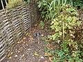 Chelsea Physic Garden Poisonous Plants.jpg