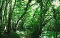 Chemin en forêt - panoramio.jpg