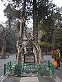 China-beijing-forbidden-city-P1000231.jpg