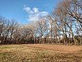 Chisinau dendrarium - autumn trees.jpg