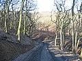 Clyne Woods in Winter - geograph.org.uk - 1169882.jpg
