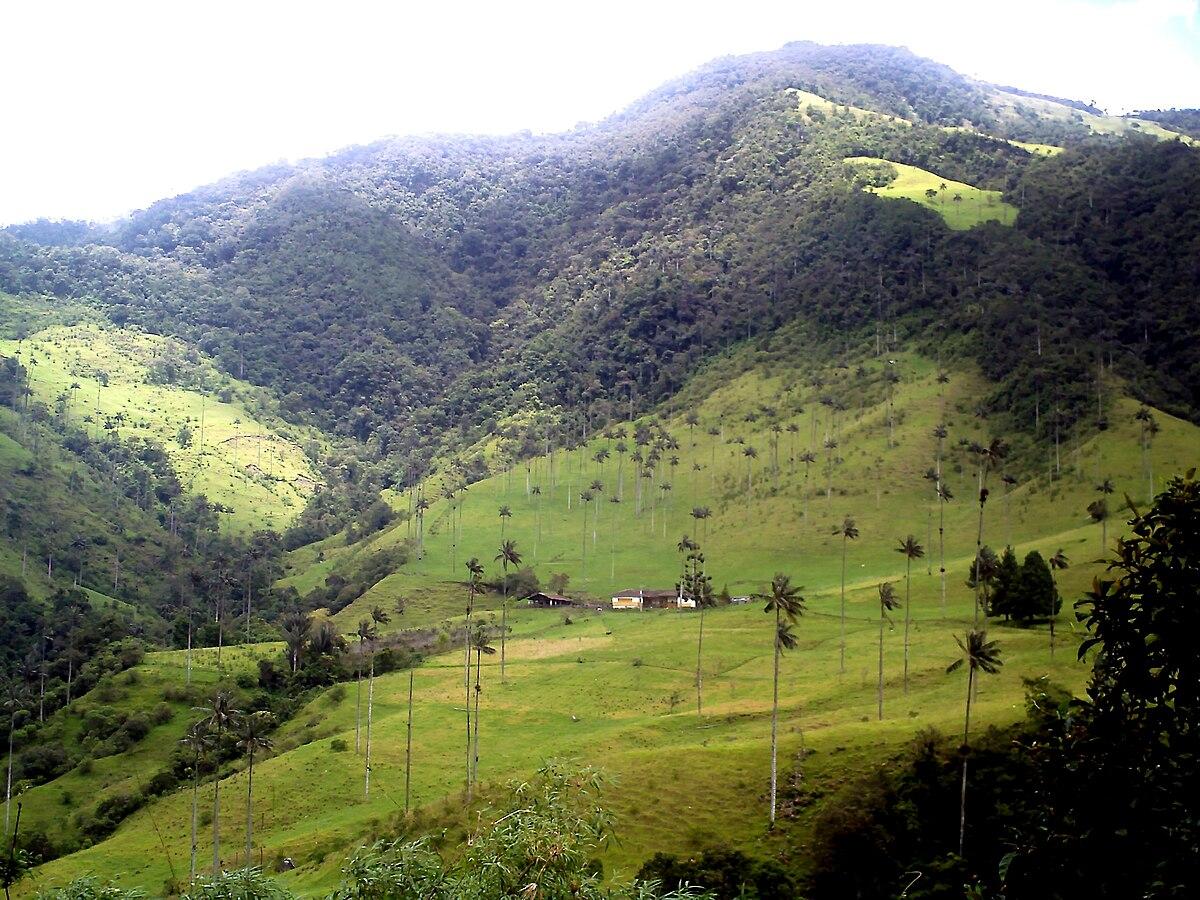 Valle de Cocora - Wikipedia, la enciclopedia libre