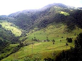 Valle De Cocora Wikipedia La Enciclopedia Libre