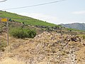 Coll dels Belitres 2012 07 20 08.jpg