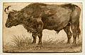 Cornelis Saftleven - Staande stier.JPG
