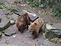 Couple of bears in Český Krumlov's Castle's moat.jpg
