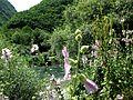 Crni Drim River 79.JPG