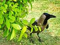 Crow 3.jpg