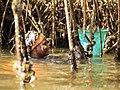 Cueilleuse traditionnelle d'Huîtres de mangrove, région du Sine Saloum, femme du village de Soucouta, Sénégal.jpg