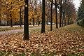 Cuggiono 11-2010 - panoramio (1).jpg