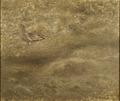 Curlew (Bruno Liljefors) - Nationalmuseum - 18660.tif