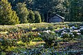 Dülmen, Welte, Rhododendronwald -- 2020 -- 6908.jpg