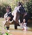 DKoehl Airavata elephants Miss Cambodia Saritha Reth and Miss Somanika Suon Pierre-Yves Clais 2020 12 13.jpg