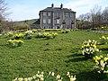 Daffodils at Castern Hall - geograph.org.uk - 1551250.jpg