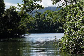 Daintree River - Confluent of tributary (foreground) and the Daintree (background)