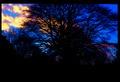 Dark tree.tif