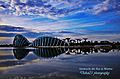 Dawn view of Gardens by the Bay, Singapore - 20111113-01.jpg