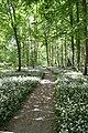 Der Weg durch blühenden Bärlauch im Niedwald (Frankfurt am Main) mit Tipi aus Ästen im Hintergrund.jpg