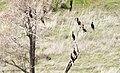 Deschutes Wild and Scenic River (26217278633).jpg