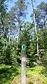 Deutschland Schleswig-Holstein Segeberger Forst Naturwald.jpg