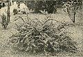 Die Gartenwelt (1899) (20731379080).jpg
