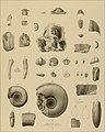 Die Versteinerungen des rheinischen Schichtensystems in Nassau. Mit einer kurzgefassten Geognosie dieses Gebietes und mit steter Berücksichtigung analoger Schichten anderer Lander (1850) (14597443730).jpg