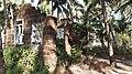 Dilapidated houses in rural Kerala 15.jpg