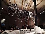 Dinosaurier Berlin naturkunde - 5.jpeg