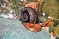 Diorama of a Devonian seafloor - gastropod, corals, algae 2 (30717352527).jpg