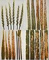 Diseases of field crops in the Prairie Provinces (1957) (20972998405).jpg