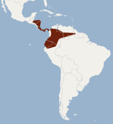 Distribution of Carollia castanea.png